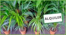 Alquiler de plantas vivas