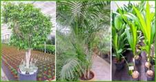 Palmeras y plantas grandes